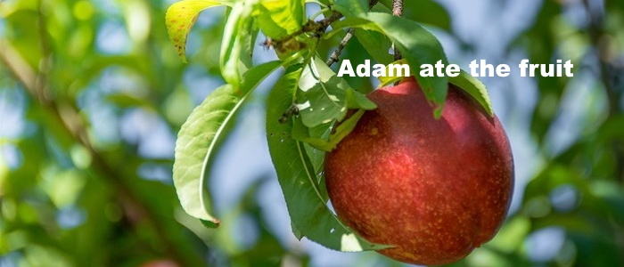 Adam ate the fruit
